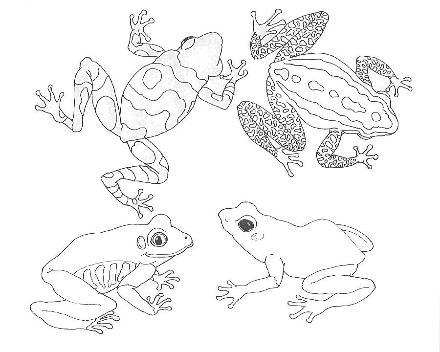 umbrella coloriage mural grenouilles