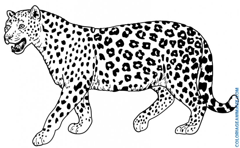 Tribal Photo likewise Drawn 20jaguar 20simple together with Courtyard House Aileen Sage Architects also License Plate Template likewise Simple Drawings. on leopard in car