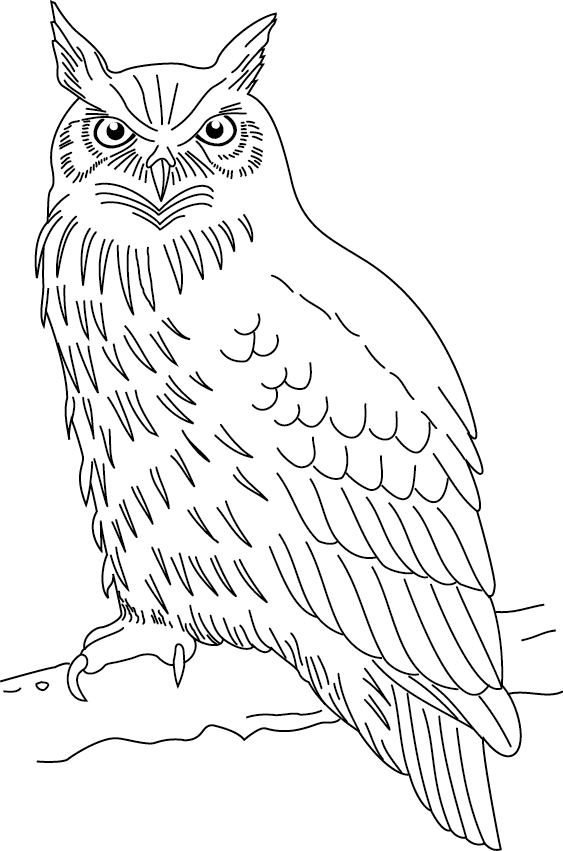 S lection de coloriage hibou imprimer sur page 2 - Dessin de hibou ...