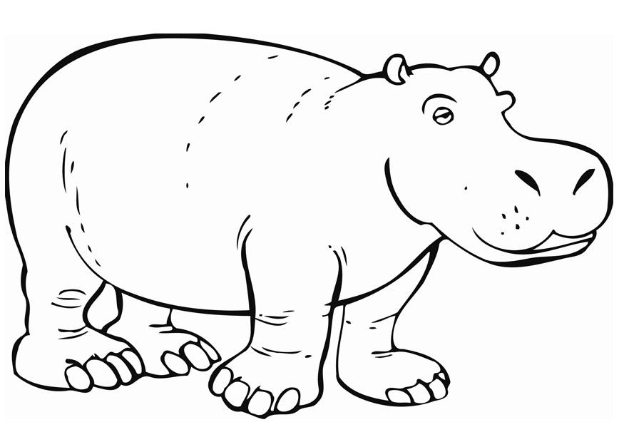 Dessin de hippopotame à imprimer
