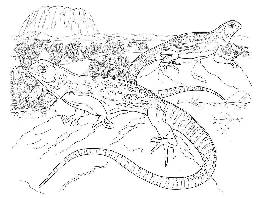 galapagos animals coloring pages - photo #50