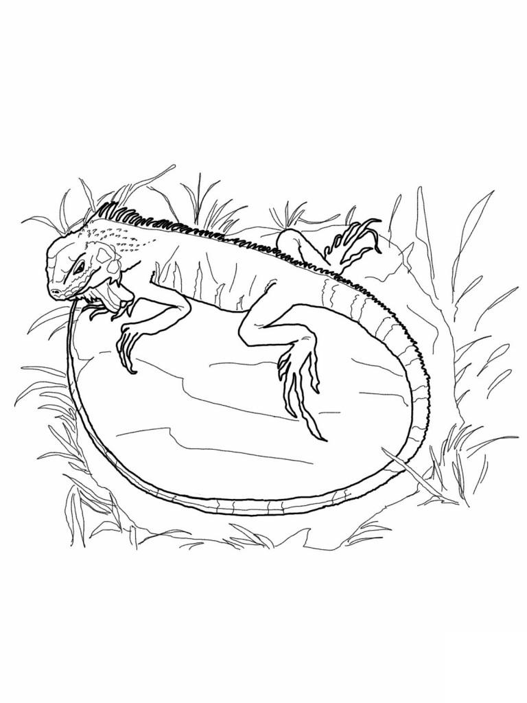 S lection de coloriage iguane imprimer sur page 3 - Coloriage iguane ...