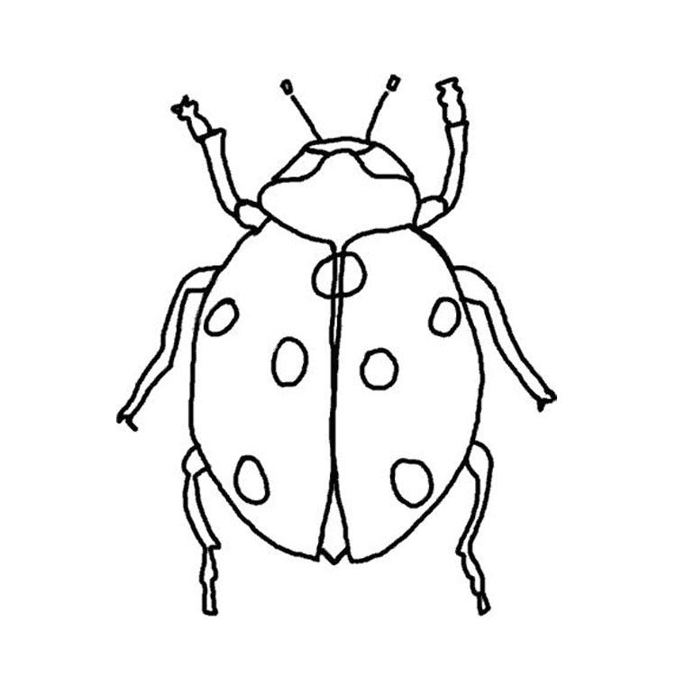 phoà dessineriage coccinelle : image gratuite coloriage coccinelle