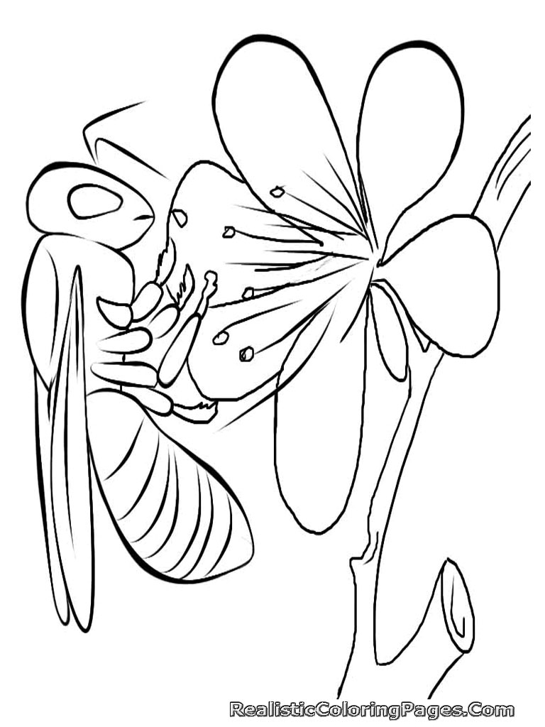 realistic dessins à colorier we will share gratuit realistic insect coloriage