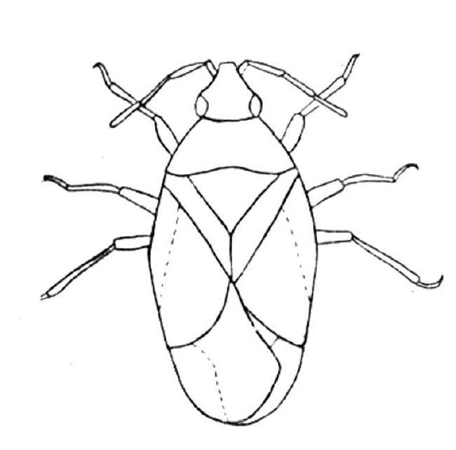 insect coloriage pages dessin gratuit à colorier site