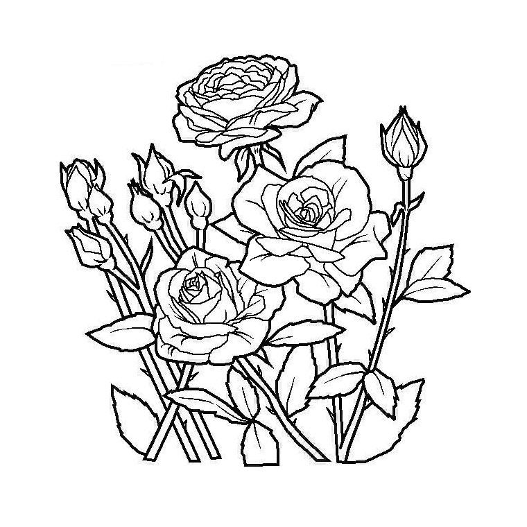 le coloriage jardin de fleurs pour imprimer le coloriage jardin