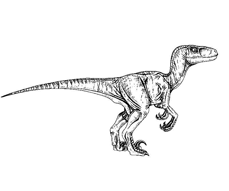 Coloriage Dinosaure Jurassic Park Gratuit.33 Dessins De Coloriage Jurassic Park A Imprimer Sur Laguerche Com