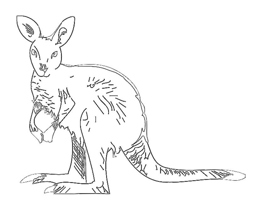 S lection de coloriage kangourou imprimer sur page 2 - Dessiner un kangourou ...