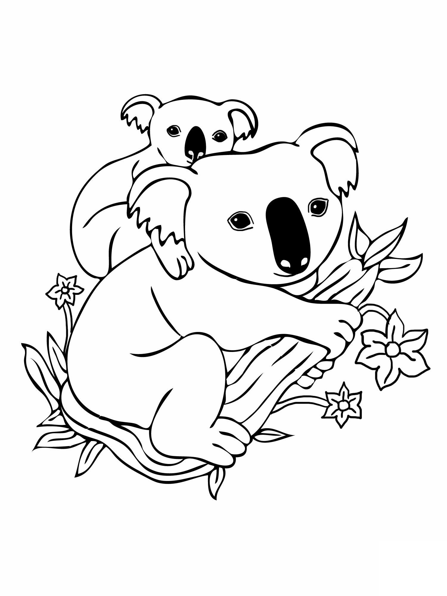 Dessin gratuit de koala a imprimer et colorier