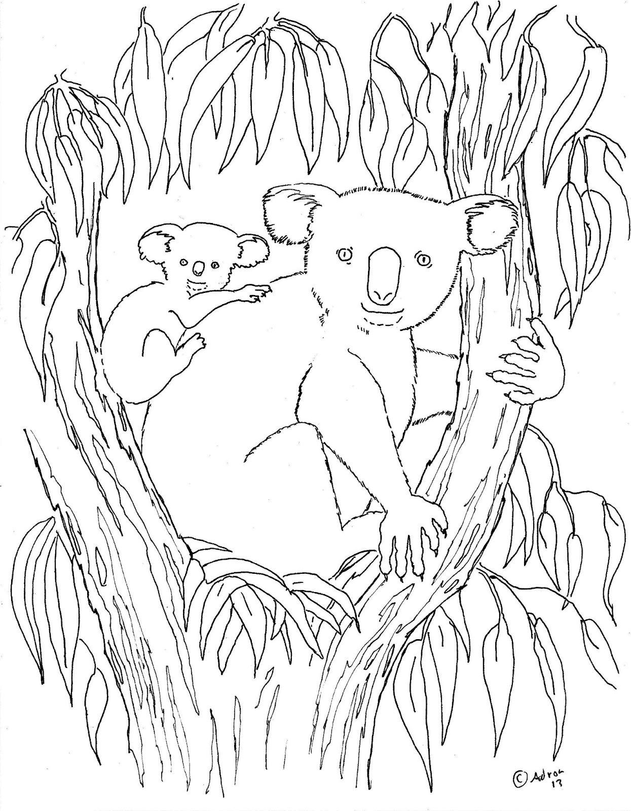 Dessin gratuit koala a colorier