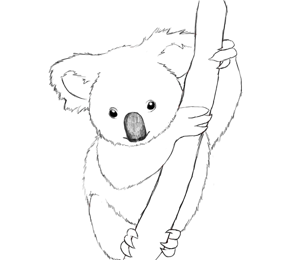 Dessin de koala a imprimer
