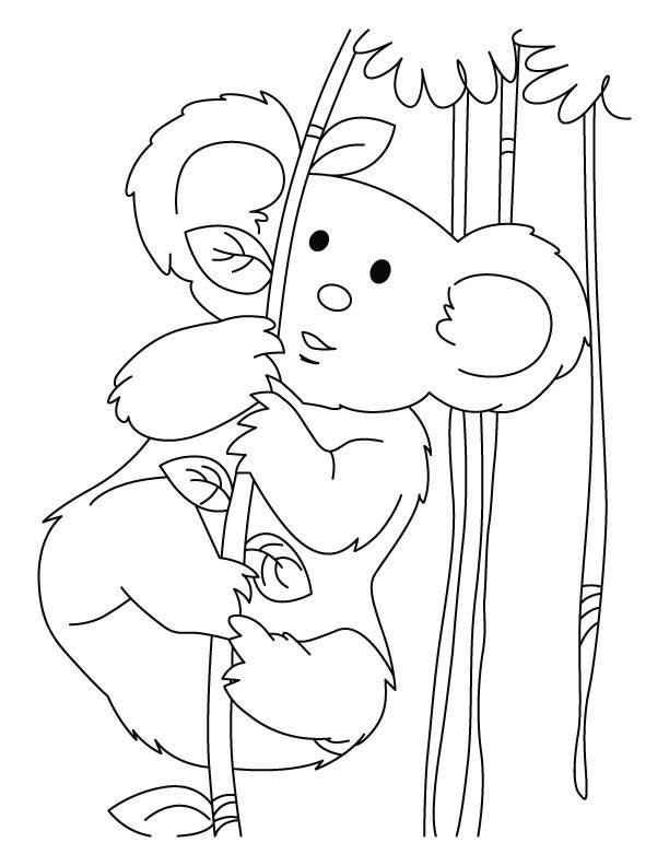 Coloriage de koala gratuit a imprimer