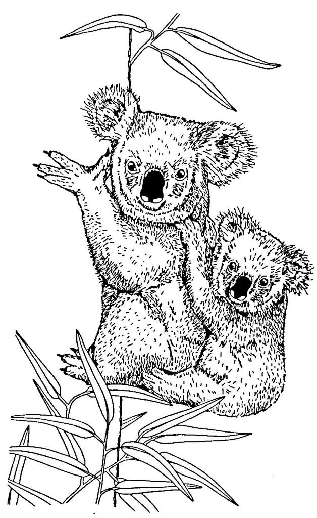 coloriage anti stress koala