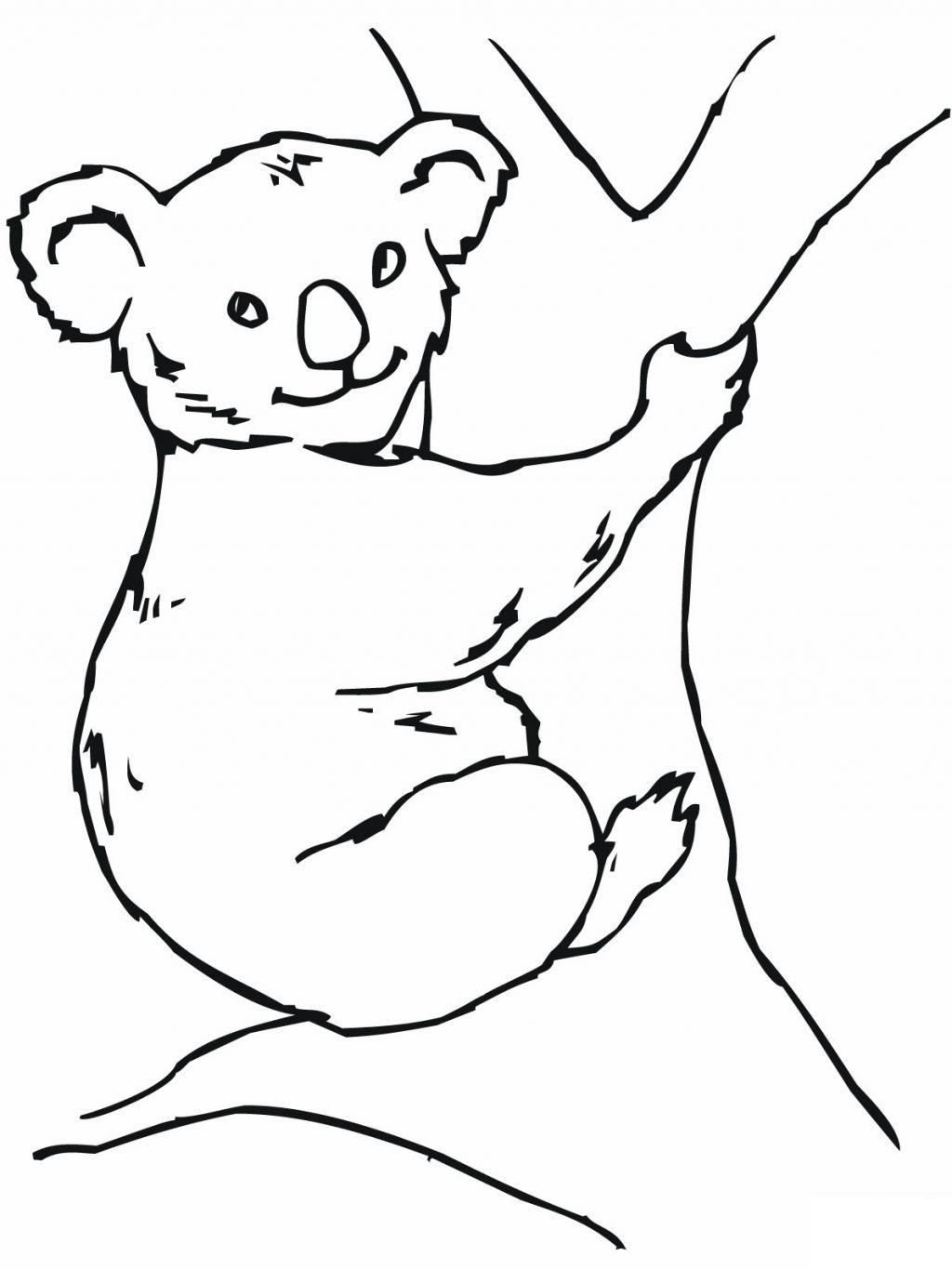 Coloriage de koala gratuit