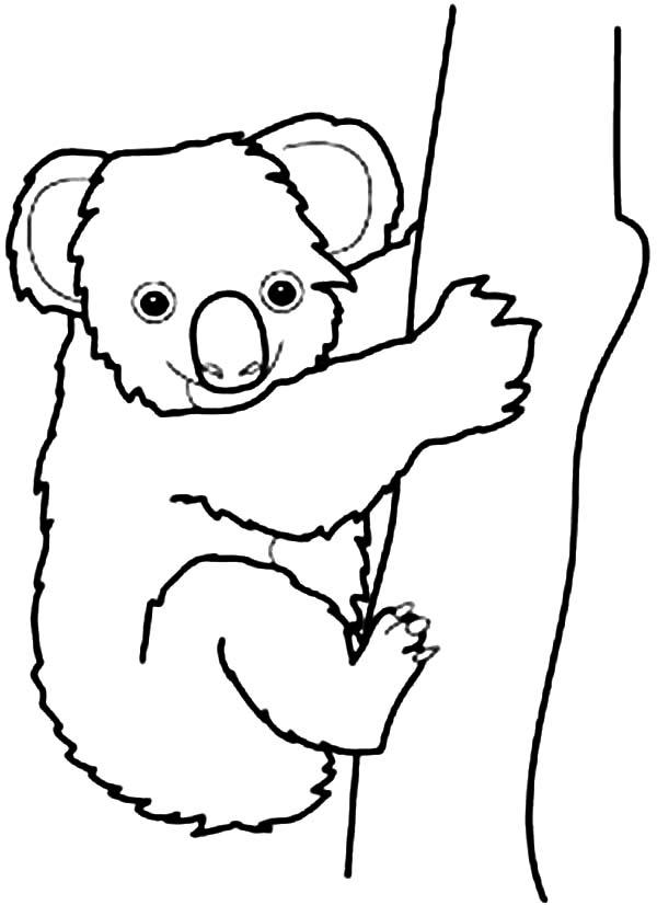 Coloriage de koala a colorier