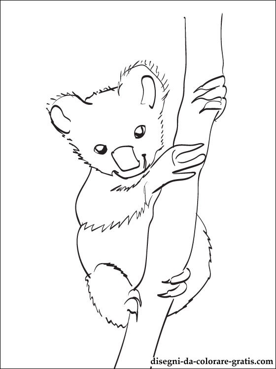 Dessin de koala a colorier