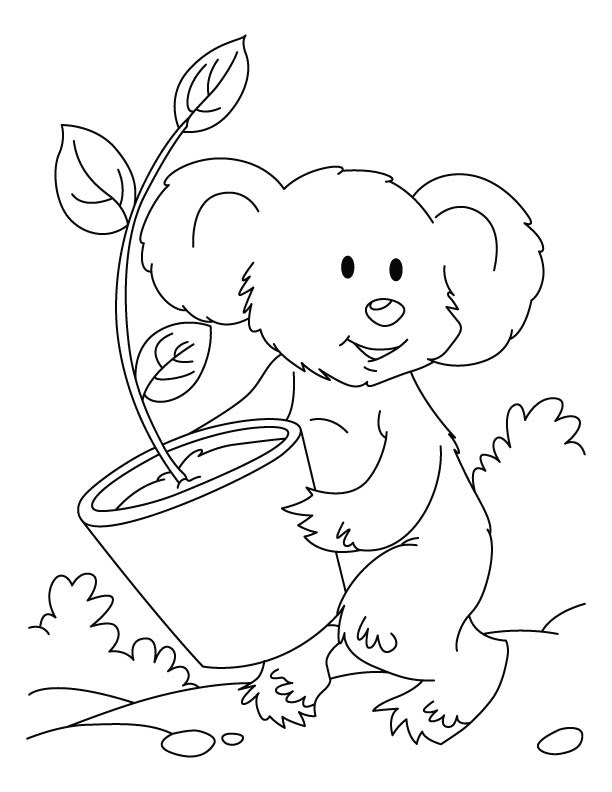 Dessin de koala gratuit a imprimer et colorier
