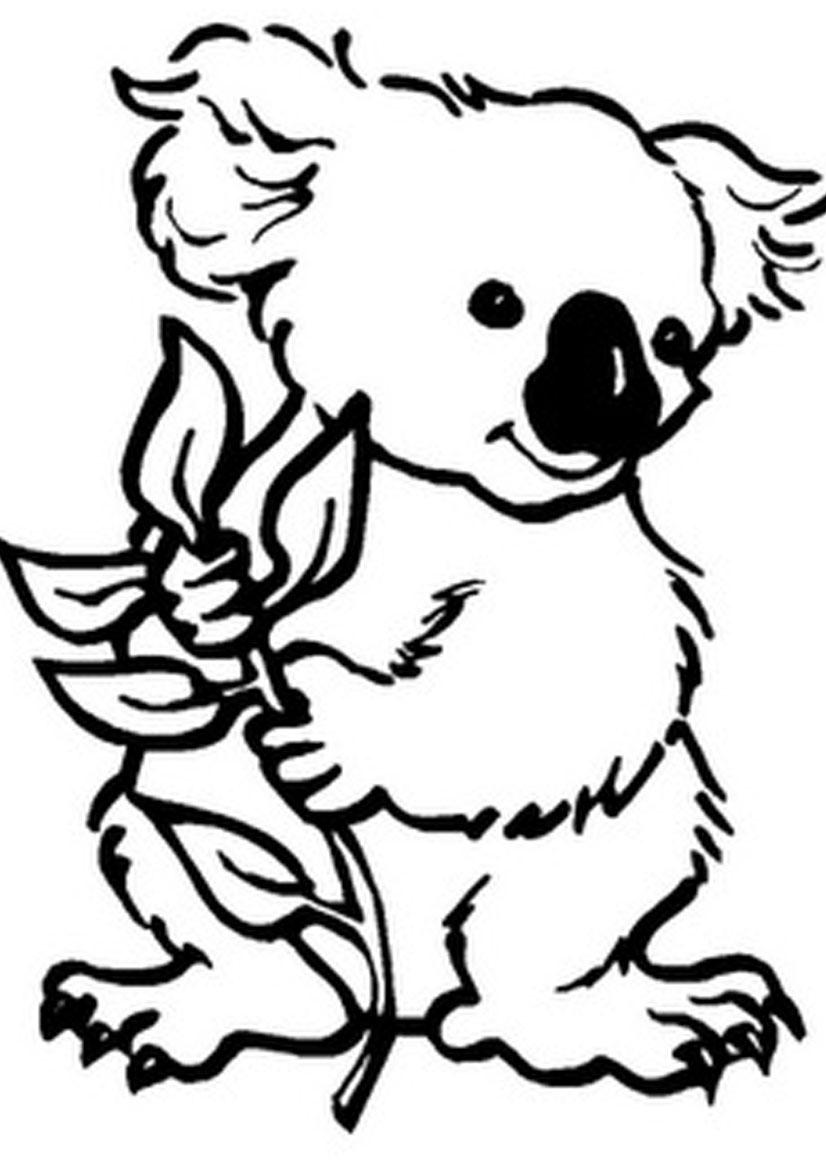 Coloriage de koala à imprimer