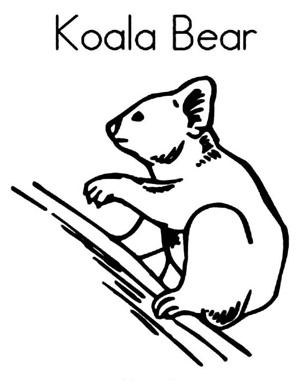 Coloriage de koala gratuit à imprimer et colorier