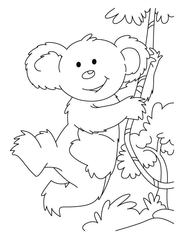 Coloriage koala imprimer et colorier