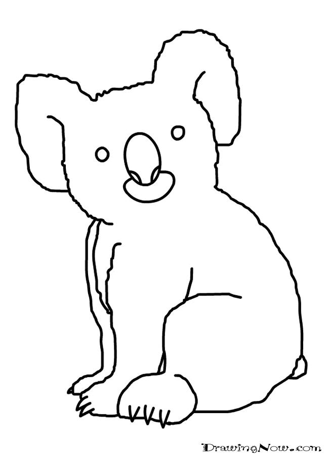 Coloriage koala a colorier