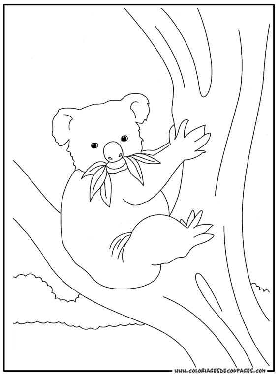 Jeux de coloriage koala a imprimer et colorier