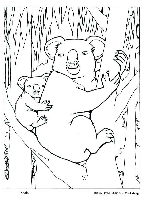 Image de koala a imprimer et colorier