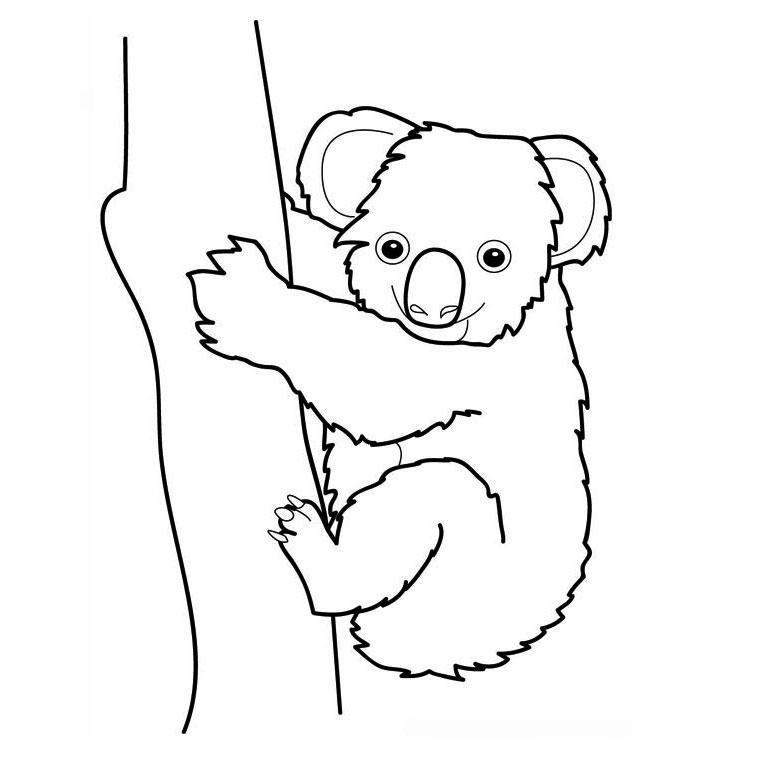Dessin gratuit koala a imprimer