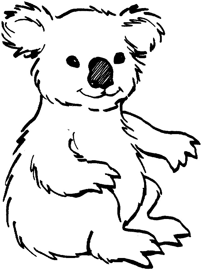 how to draw a baby koala step by step