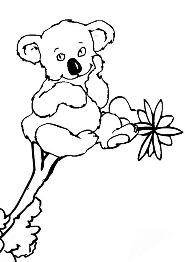 Coloriage de koala a imprimer