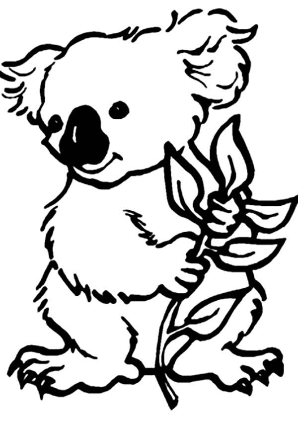 Dessin de koala gratuit