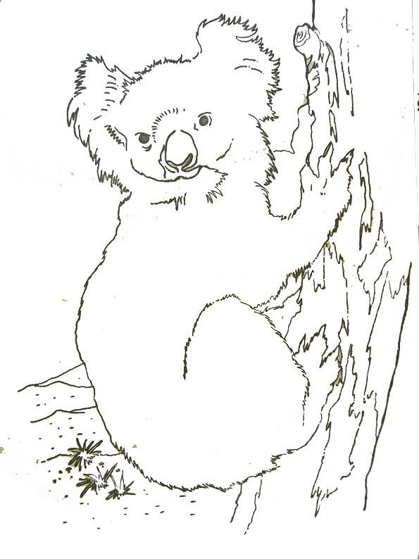 Coloriage de koala