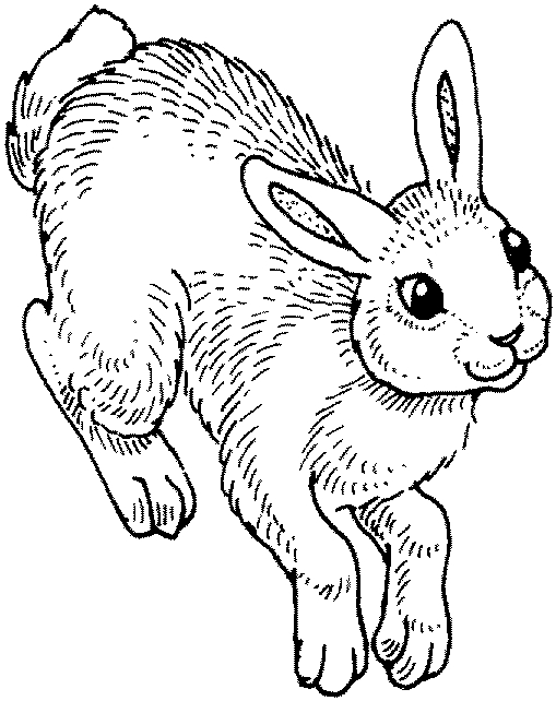 Jeux de coloriage lapin