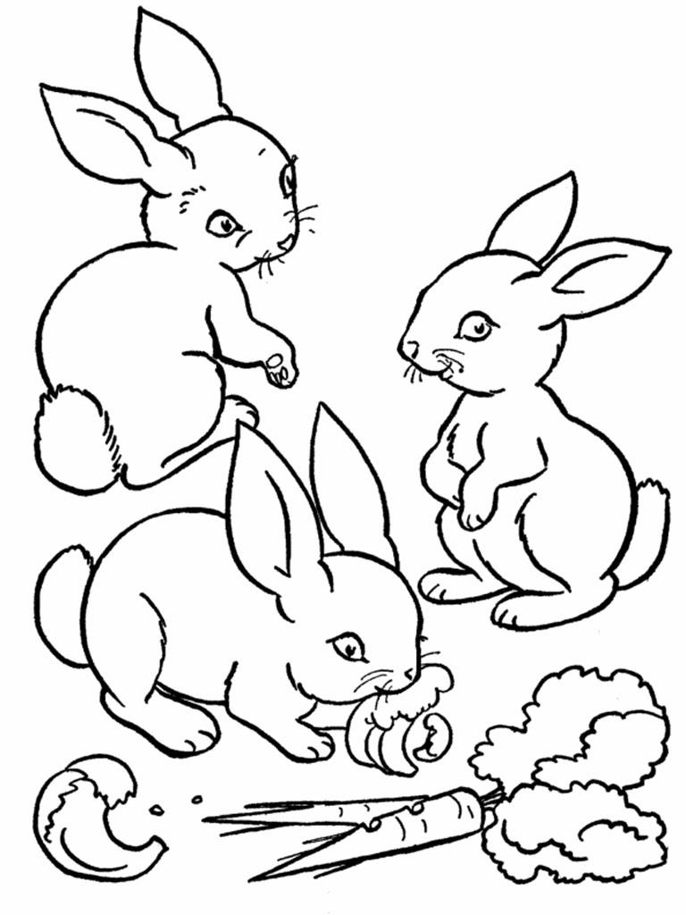 Coloriage de lapin a imprimer