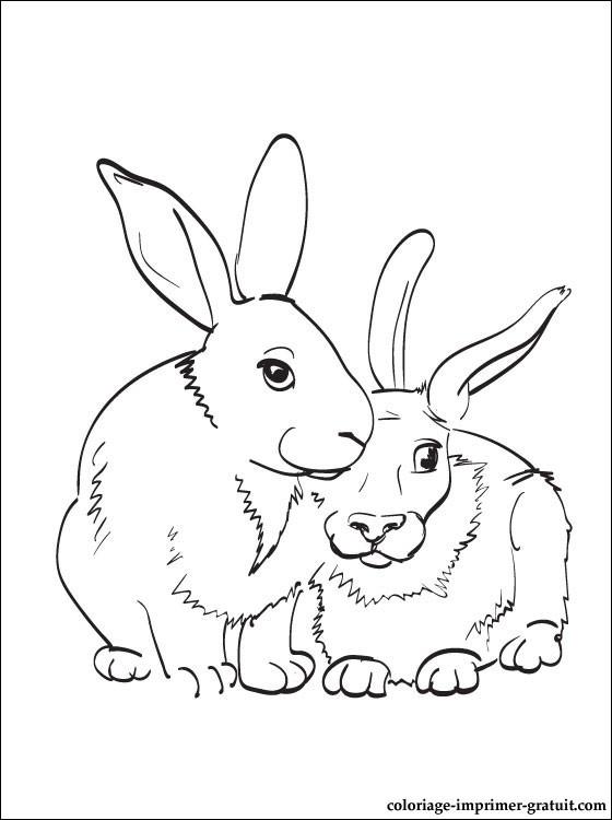 Dessin gratuit lapin à imprimer