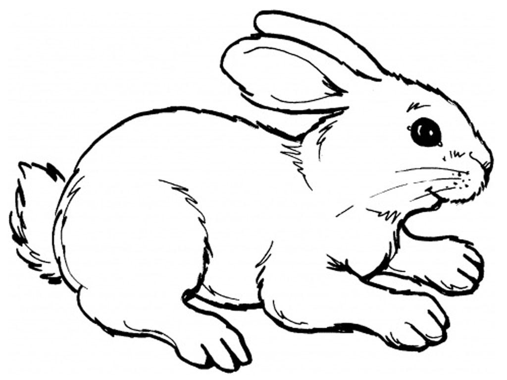 128 dessins de coloriage lapin imprimer sur page 13 - Dessin un lapin ...