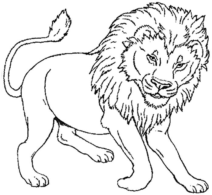 dessin de lion gratuit