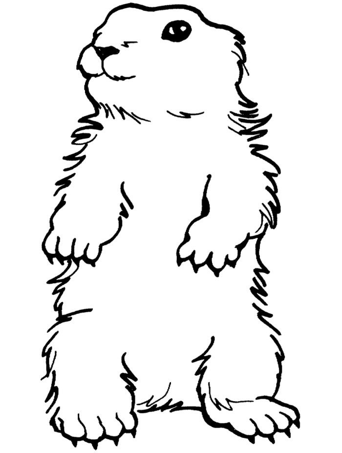S lection de coloriage marmotte imprimer sur page 1 - Coloriage marmotte ...