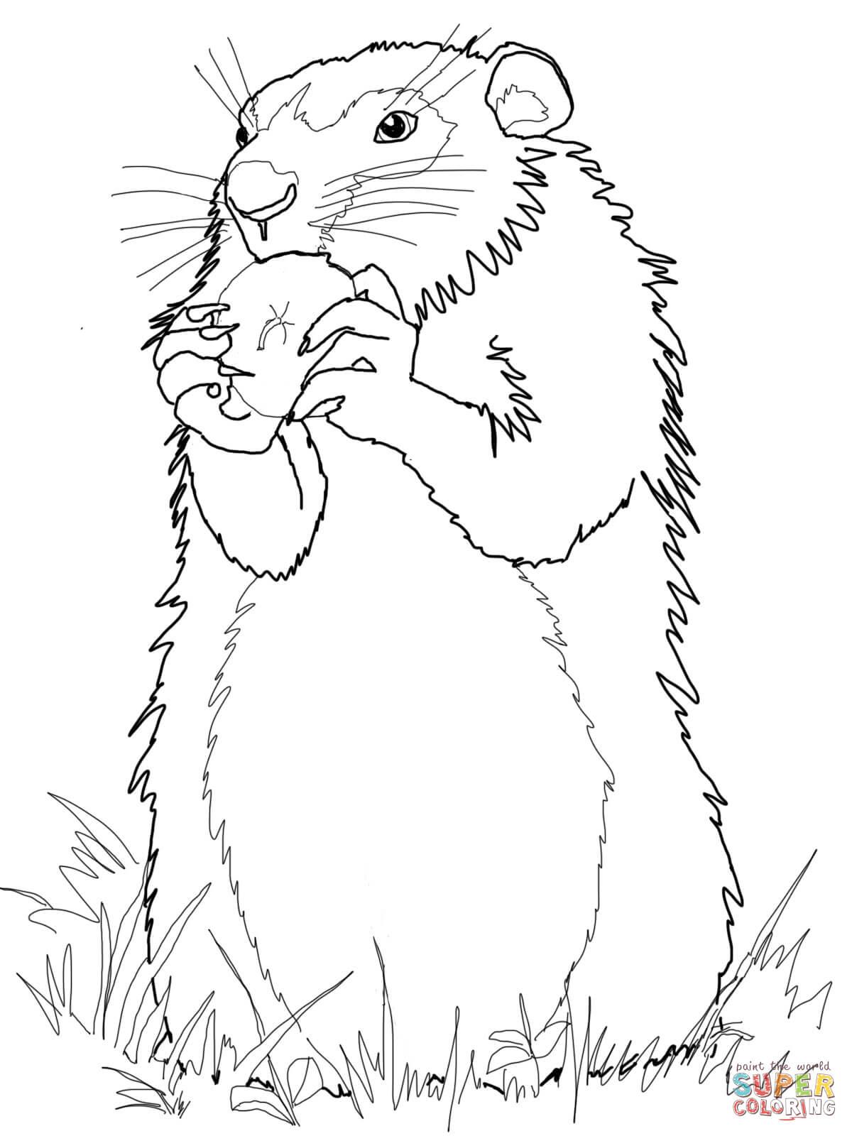 S lection de coloriage marmotte imprimer sur page 2 - Coloriage marmotte ...