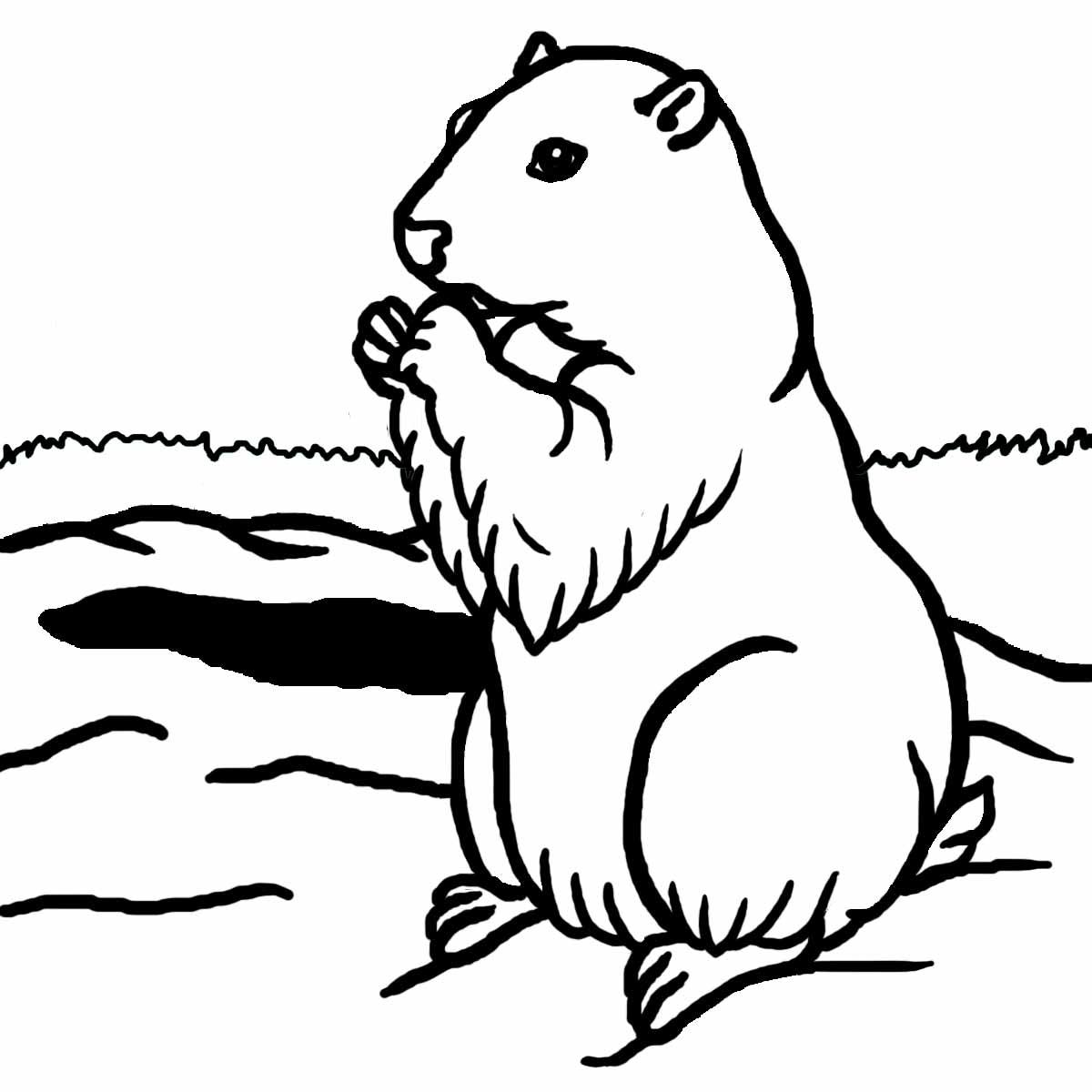 D Line Drawing : Sélection de coloriage marmotte à imprimer sur laguerche
