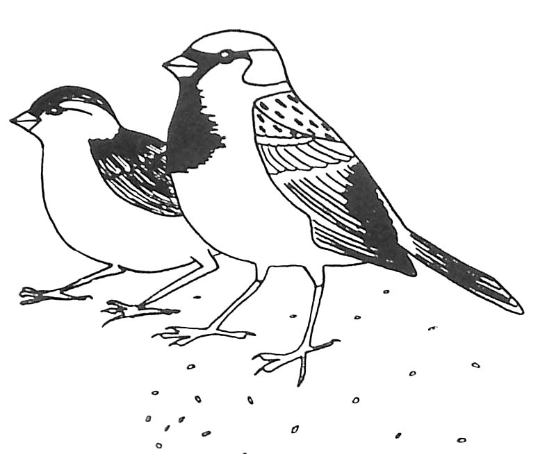 Coloriage de oiseau gratuit