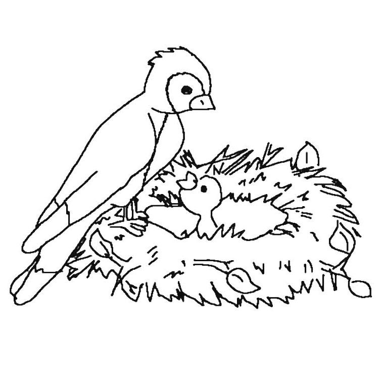 Coloriage oiseau a colorier