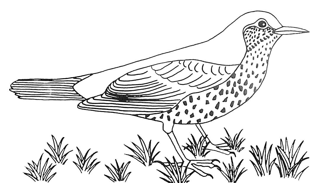 Dessin gratuit de oiseau a imprimer et colorier
