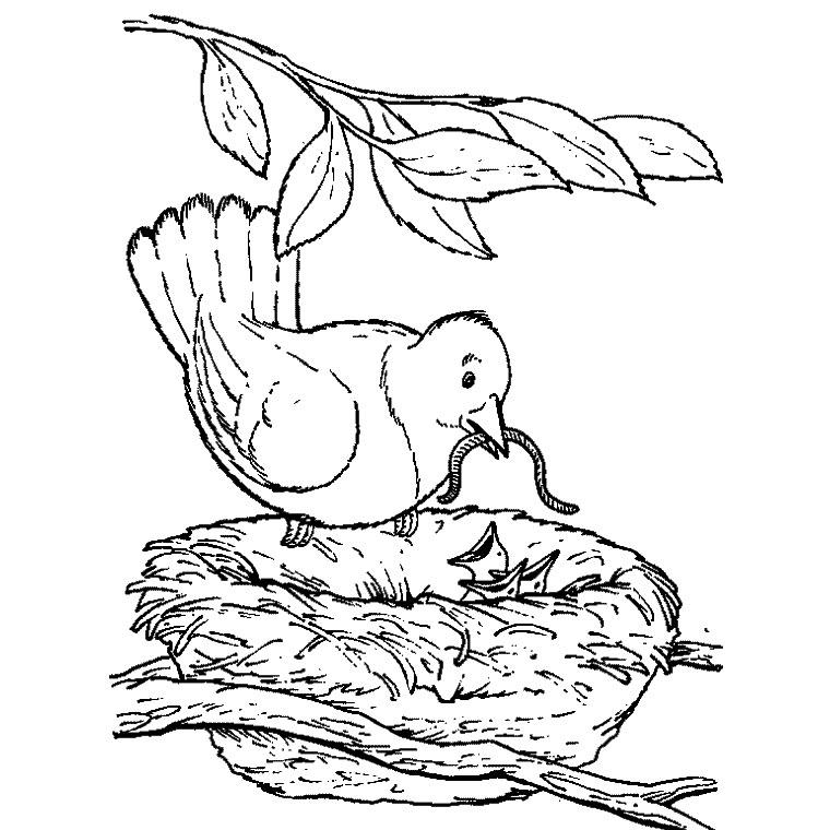 Dessin gratuit oiseau a imprimer