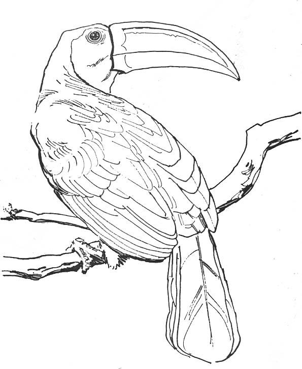 Dessin gratuit de oiseau a colorier