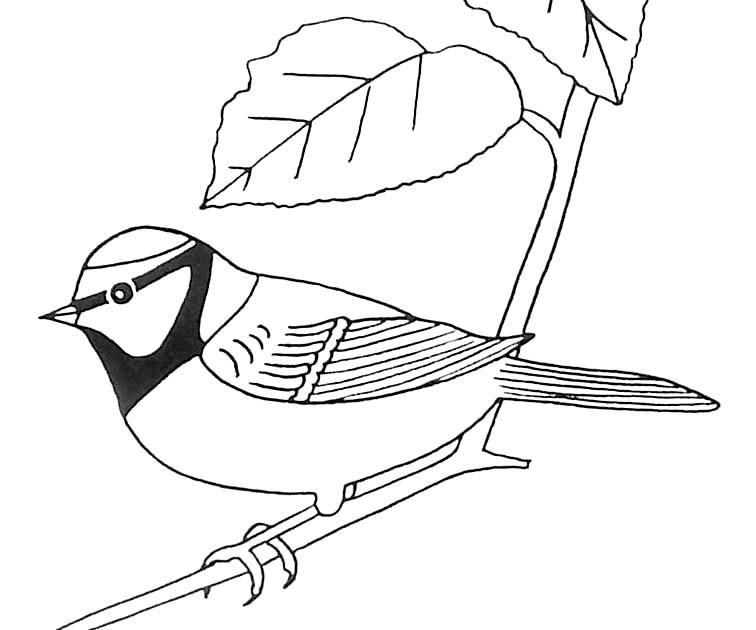 Jeux de coloriage oiseau