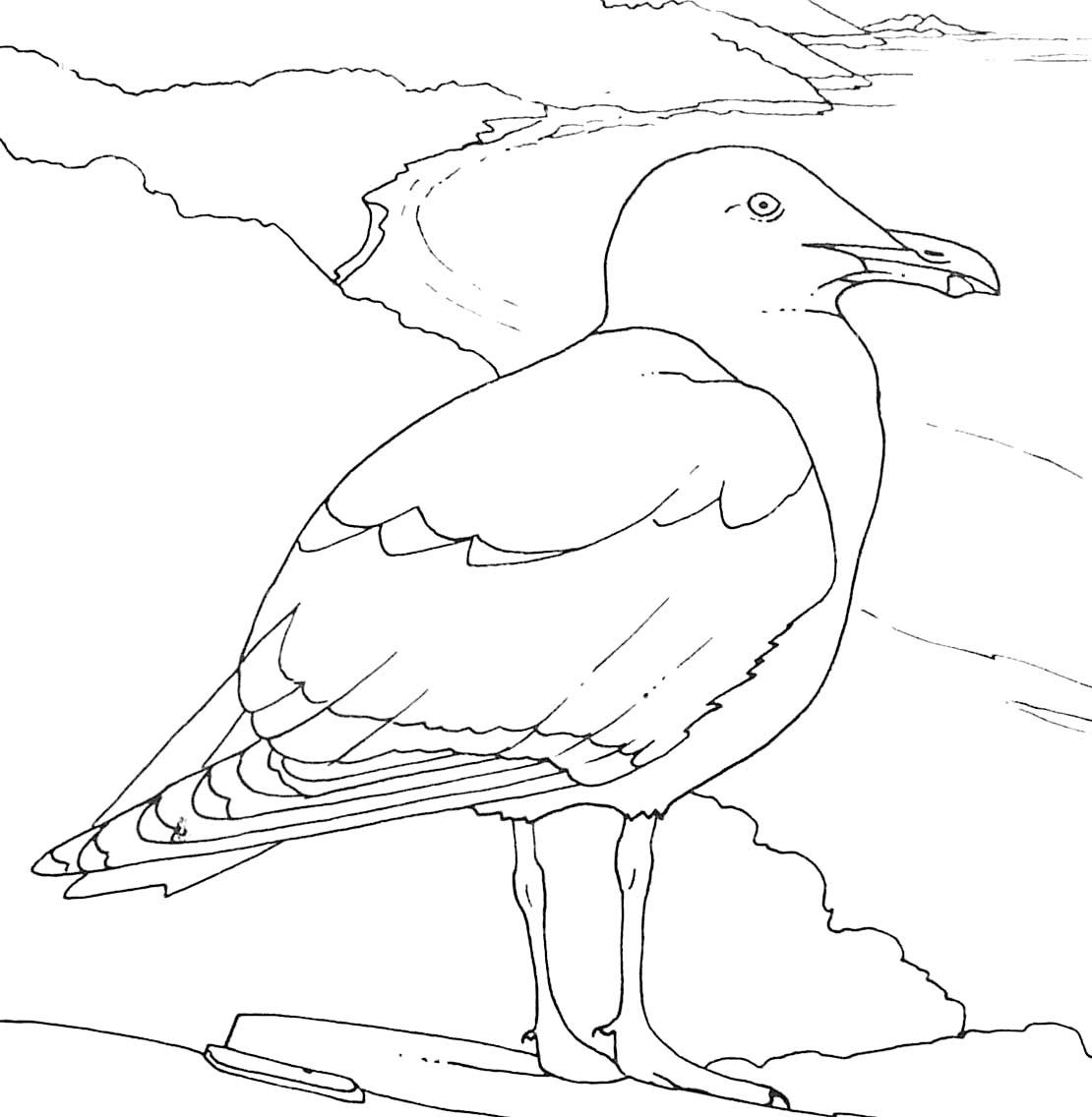 Dessin de oiseau à colorier et imprimer