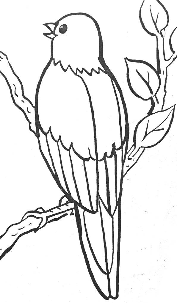 Coloriage de oiseau gratuit à imprimer et colorier