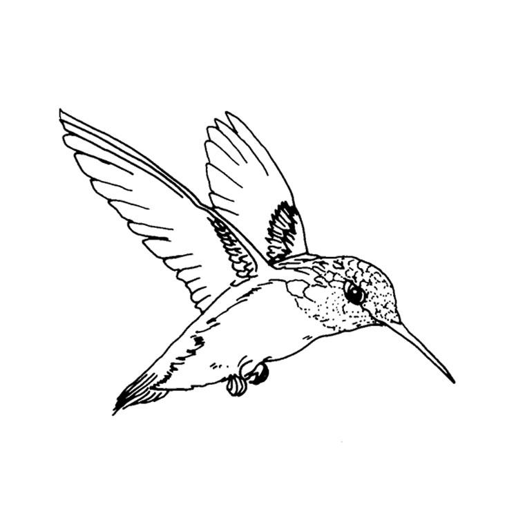 Coloriage oiseau