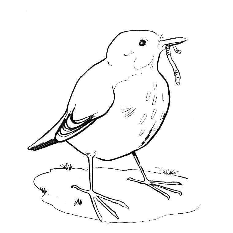 Dessin gratuit oiseau a imprimer et colorier